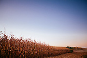 Harvesting Corn in Iowa.<br /> Photographed by editorial lifestyle Texas photographer Nathan Lindstrom