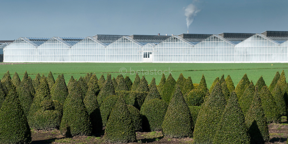 Modern kassencomplex  in Rijsenhout. A new greebhouse complex with buxus plants in the foreground.