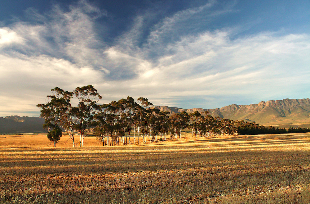 Trees, fields, and mountains at sunset outside Ceres, Western Cape, South Africa.