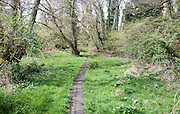 Path leading into woodland at Newbourne Springs Nature Reserve, Newbourne, Suffolk, England
