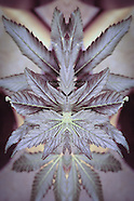 Crystalline Medicine