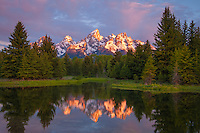 The teton range lights up from early morning alpine glow and is perfectly reflected into a beaver pond in Grand Tetons National Park