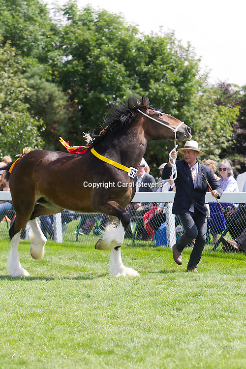 Richard &amp; Robert Bedford's bay filly  Tochill Lady Victoria<br />