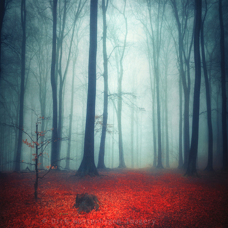 Foggy forest on a rainy autumn day - texturized photograph<br />