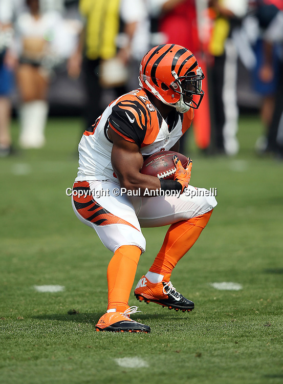 Cincinnati Bengals running back Giovani Bernard (25) runs the ball during the 2015 NFL week 1 regular season football game against the Oakland Raiders on Sunday, Sept. 13, 2015 in Oakland, Calif. The Bengals won the game 33-13. (©Paul Anthony Spinelli)