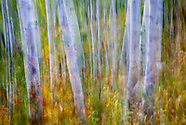Lost in Motion-The Aspen Series