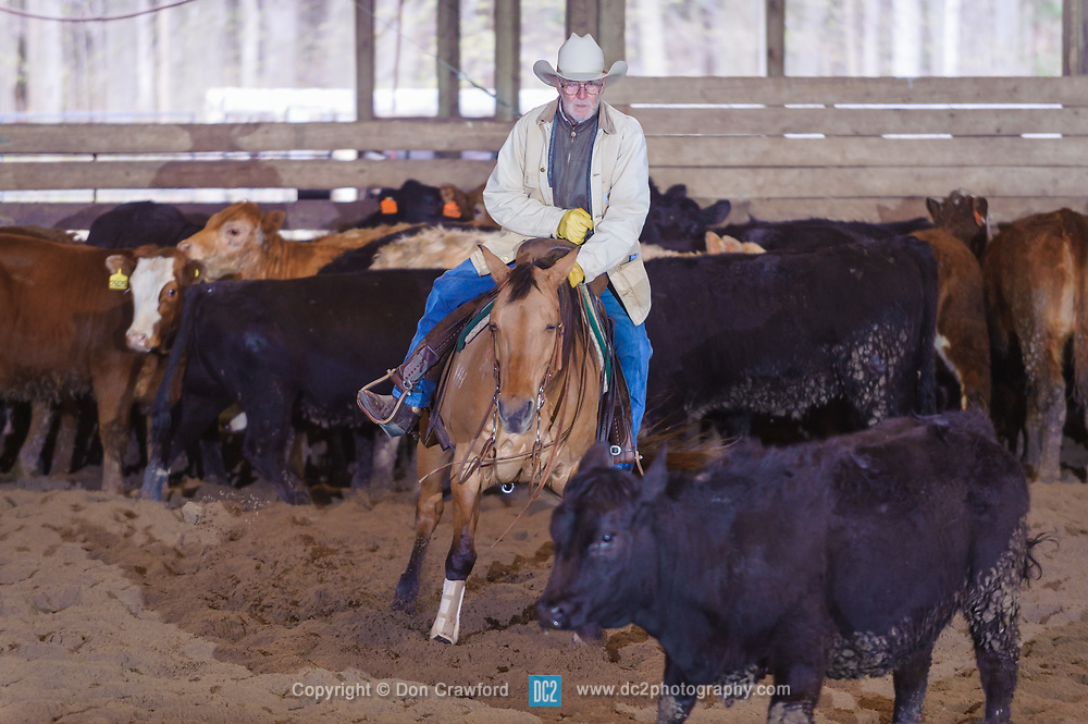 April 30 2017 - Minshall Farm Cutting 2, held at Minshall Farms, Hillsburgh Ontario. The event was put on by the Ontario Cutting Horse Association. Riding in the 35,000 Non-Pro Class is Don Vincet on Lil Hypnotic owned by the rider.
