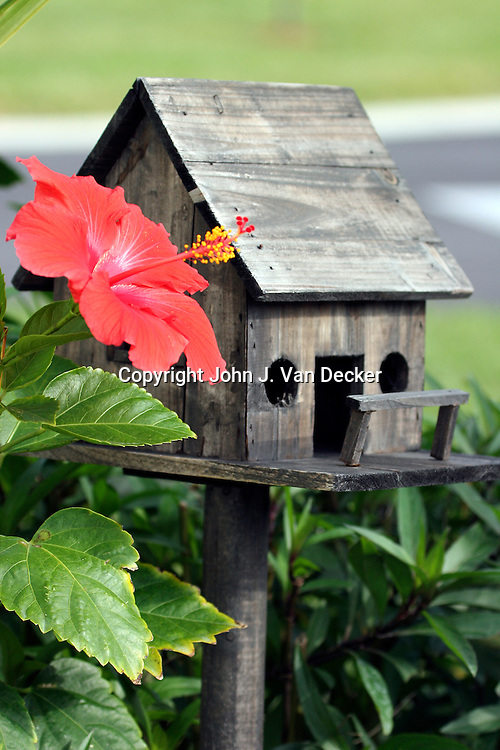 Bird House with Hibiscus flower in Southwest Florida..(Mi Casa Es Su Casa) or (My vacation home)
