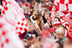 A dog is held up by its owner as thousands of fans pack Lloyds Amphitheatre during the Bristol City open top bus parade to celebrate winning both the League 1 and Johnstone's Paint Trophy titles this season and promotion to the Championship - Photo mandatory by-line: Rogan Thomson/JMP - 07966 386802 - 04/05/2015 - SPORT - FOOTBALL - Bristol, England - Bristol City Bus Parade.