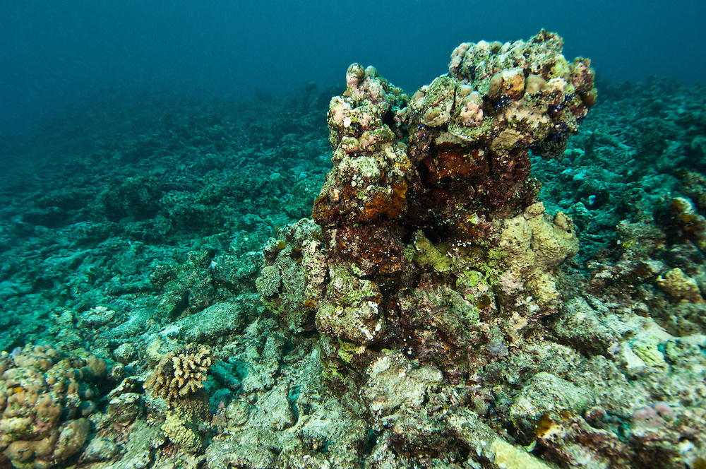Hard coral reef completely destroyed by fish bombing, a highly destructive fishing practice, Biak, West Papua, Indonesia.