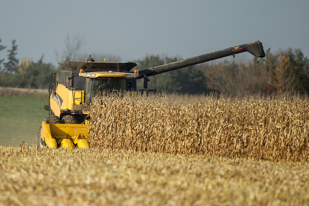 Ralph Kuebler harvests corn near Ilderton, Ontario, Tuesday, November 1, 2016.<br /> Farmers Forum/ Geoff Robins