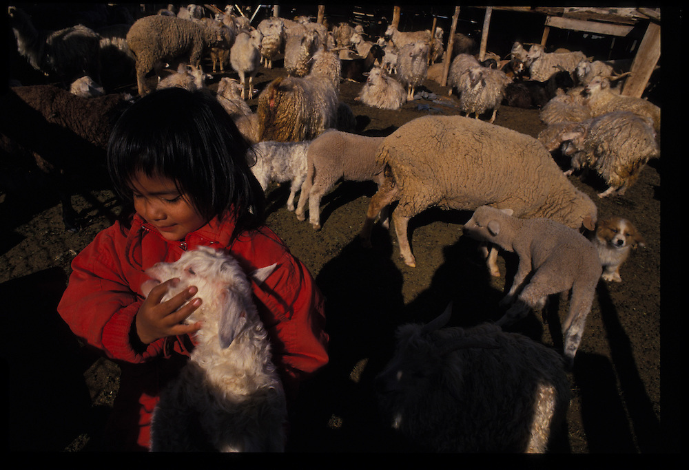 Engenia Chee (4) with a new-born sheep.   Oljeto, Utah.