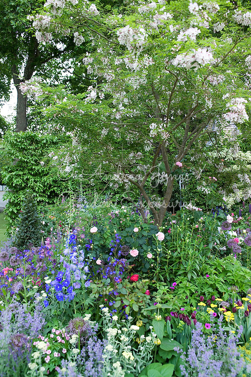 Celebrating the centenary of gardening at Hidcote Manor including Styrax japonicus (Japanese snowbell), Tulipa 'Black Jack', Nepeta faassenii, Rosa 'Fantin-Latour', Allium christophii and Ranunculus aconitifolium 'Flore Pleno'<br /> <br /> 'The Chris Beardshaw Garden'<br /> Design by Chris Beardshaw  <br /> RHS Chelsea 2007 Silver-Gilt Medal.