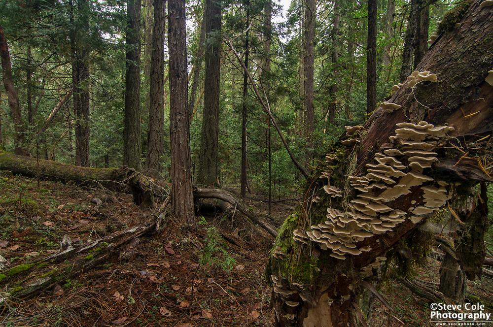 Woodchuck Timber Sale Unit 01 #1 - Days Creek