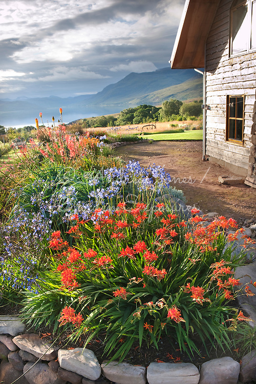 The flowering South African bed with view to Little Loch Broom<br /> <br /> <br /> 2 Durnamuck, Little Loch Broom, Wester Ross, Scotland