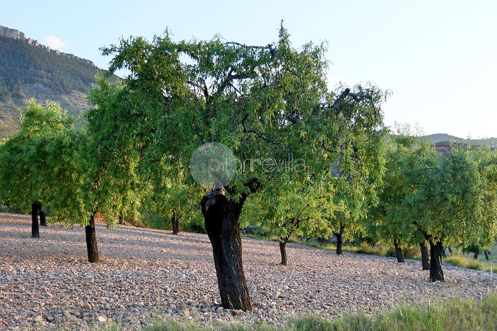 Almendros en la valle del Cidacos. La Rioja ©Daniel Acevedo / PILAR REVILLA