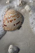 Seashell in a wave on Honeymoon Beach Island, Dunedin FL.g