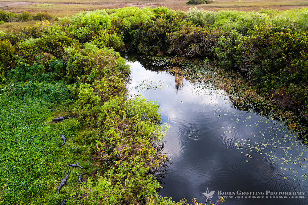 US, Florida, Everglades. View from Shark Valley Observatory Tower.