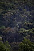 Nova Lima_MG, Brasil...Estacao Ecologica de Fechos no Condominio Passargada em Nova Lima, Minas Gerais...Fechos Ecological station at condominium Passargada in Nova Lima, Minas Gerais...Foto: JOAO MARCOS ROSA / NITRO