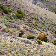 Heather Goodrich riding Singletrack switchbacks in early spring near Pocatello, Idaho.