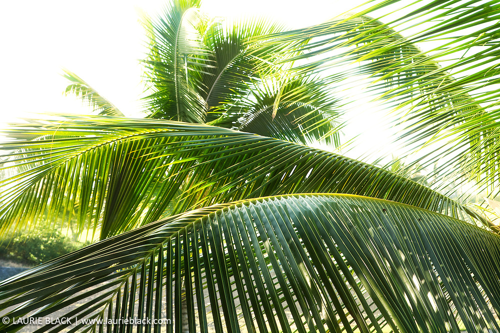 Palm foliage botanical photo