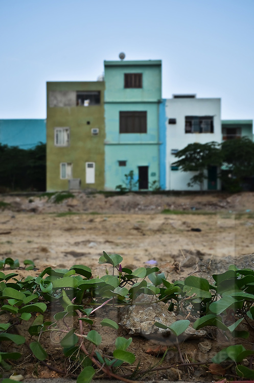 In Danang ivy plant grows on a empty land where houses were destructed. Old houses remain in the background. Vietnam, Asia