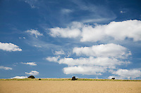 Field and sky with clouds