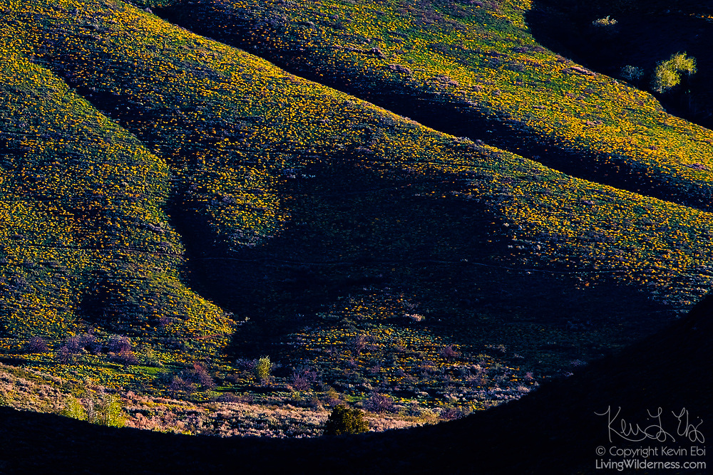 The early morning light stretches across Fawn Peak near Winthrop, Washington, casting long shadows and illuminating the bright yellow balsamroot flowers.