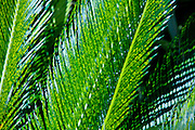 Close-Up Abstract Palm Leaves.