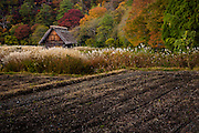 On the outskirts of Ogimachi village, a small traditional thatched roof cottage stands between the autumn forest and the ploughed crop fields
