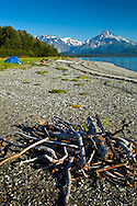 Campers at Goose Cove,  Glacier Bay National Park & Preserve, Southeast Alaska on a sunny day, summer. Drift wood gathered in the foreground.  Mount Wright in the background. Model Released #0152010MR, #0162010MR
