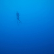 Kolt Johnson ascends from a dive while spearfishing in the gulf Stream, off the coast of NC.