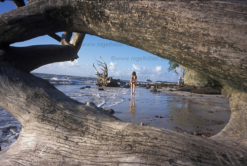 copyright: Nigel Hillier.Brazil, Para, Algodoal, driftwood on beach with girl walking in distance