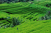 A woman passing rice terraces near Apuan.