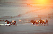 Town of Wallkill, New York  - Harness racing horses work out on a cold morning at the Mark Ford Training Center on  Dec.12, 2011.