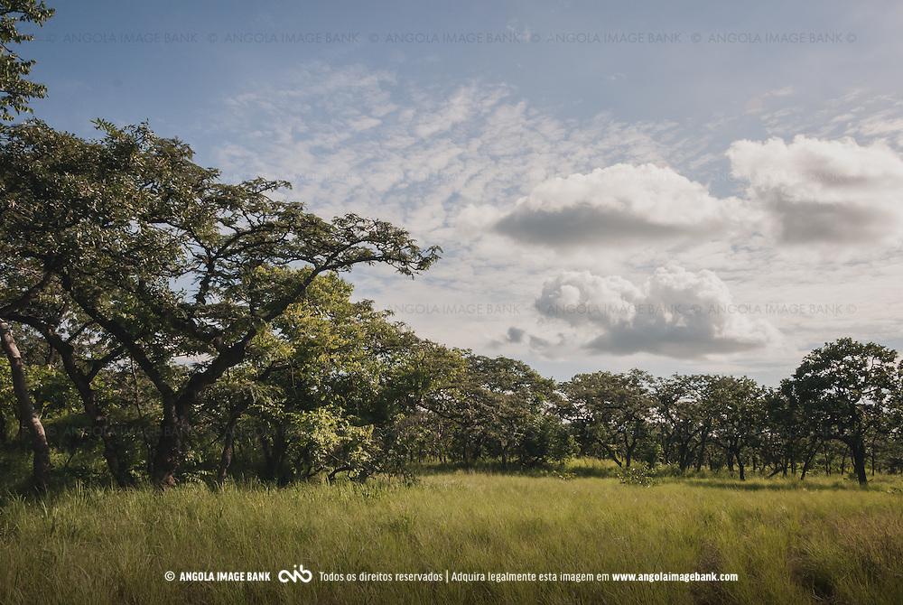 Floresta Miombo no Parque Nacional da Cangandala na província de Malange. Projecto de preservação da Palanca Negra Gigante (Hippotragus niger variani) iniciado e mantido pelo Dr. Pedro Vaz Pinto. Angola