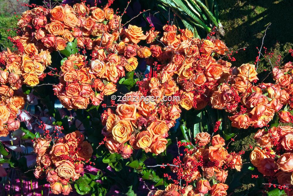 Classic pastel peach roses, orange flowers , Rain Bird, Rose Parade  Float, Mountaintop Majesty