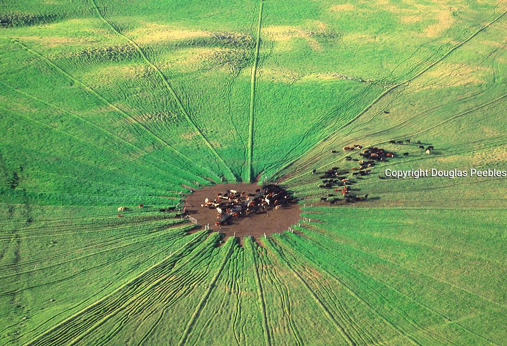 Cattle ranch, Kohala, Island of Hawaii<br />