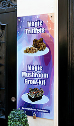 "Amsterdam, Holland:  Numerous kinds of psychoactive stimulants are widely available in this anything goes city.  This canal-side advertisement was found on the Oudezijds Achterburgwal, in the heart of the red light district...(From Wikipedia:  ""A sclerotium (plural sclerotia) is a compact mass of hardened fungal mycelium containing food reserves. One role of sclerotia is to survive environmental extremes. In some higher fungi such as ergot, sclerotia become detached and remain dormant until a favorable opportunity for growth. Other fungi that produce sclerotia are prominent pathogens for canola crops. These and related fungi are generally controlled through the use of fungicides and crop rotation...Sclerotium is a dark mass of mycelium that replaces grains which have been infected with the pathogenic fungi Claviceps purpurea. Sclerotium contains alkaloids that, when consume, can cause ergotism which is a disease that causes paranoia and hallucinations, twitches, spasms, loss of peripheral sensation, edema and loss of affected tissues. .."