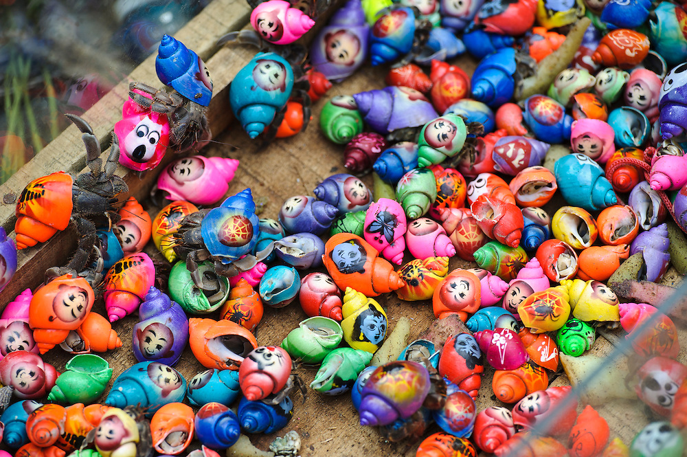 Painted hermit crabs for sale at the Maulid Nabi festival, Cikoang, Sulawesi, Indonesia.