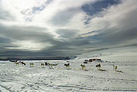 Group of dogs near trailer in snow-covered landscape