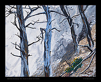 """Mammoth Hot Springs, Trees"", Yellowstone National Park, Test - 10x12 inches Acrylic on canvas"