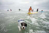 Brian Lloyd holds on to his dog Gromit's leash as the tide pulls him toward the shore.