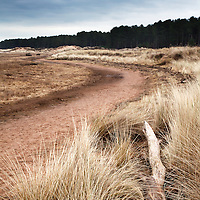 Dune Grass and Dead Tree Tentsmuir National Nature Reserve Tayport Fife Scotland