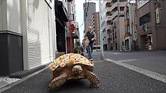 Tokyo - Man Lives With Giant Tortoise - 11 Nov 2016