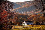 Autumn foliage around a farm in the Shenandoah Valley outside Charlottesville, Virginia, USA