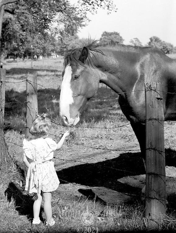 Feeding the horse