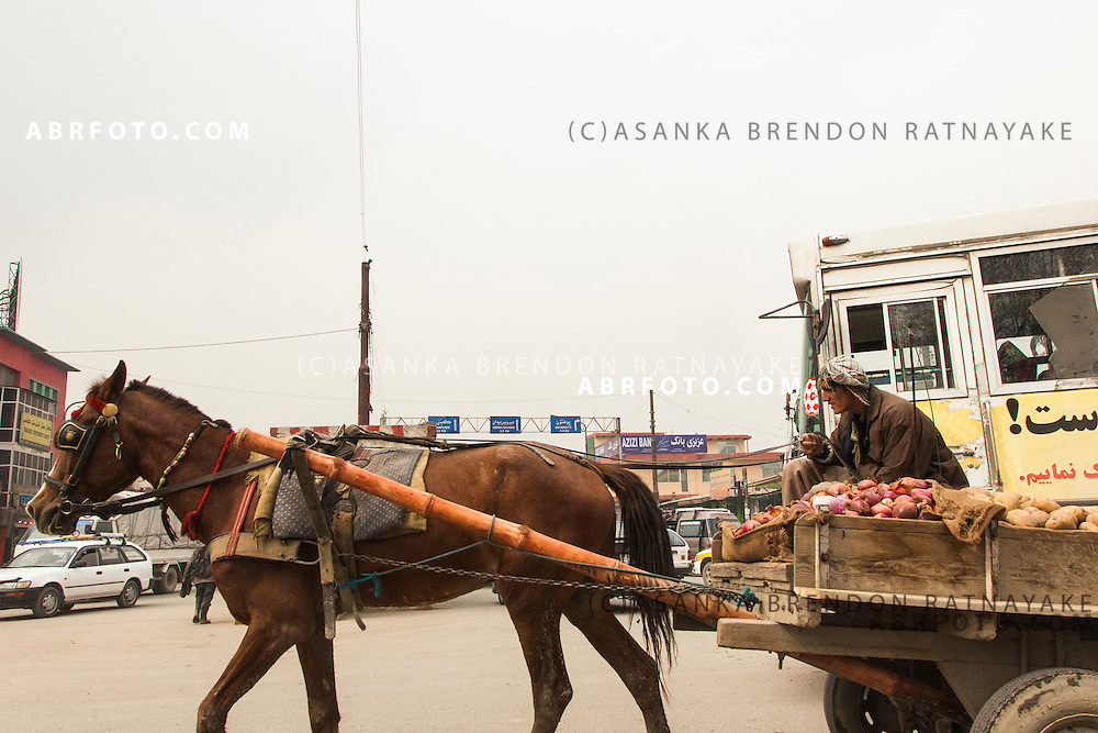 A man riding his Horse drawn cart along the streets of Kabul as he carries potatoes