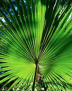 Smiths Tropical Paradise, Kauai, Hawaii, USA<br />