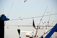 porto di Gallipoli, pescatori